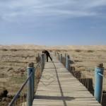 Path to Khongoryn Els
