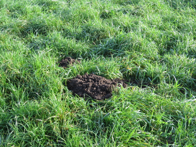 Molehill but no Mole!