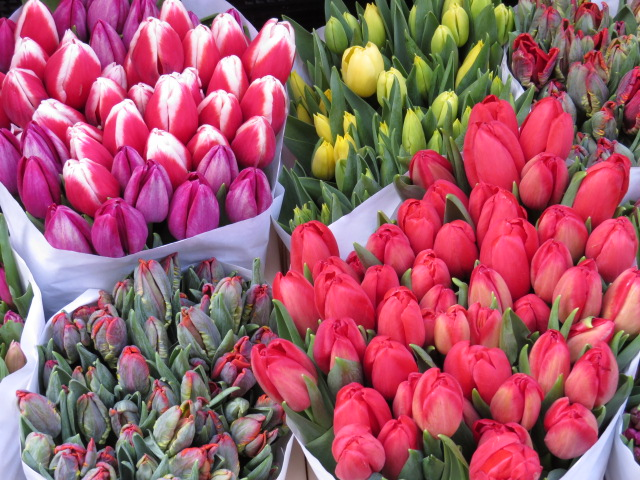 Ahhh - Tulips!