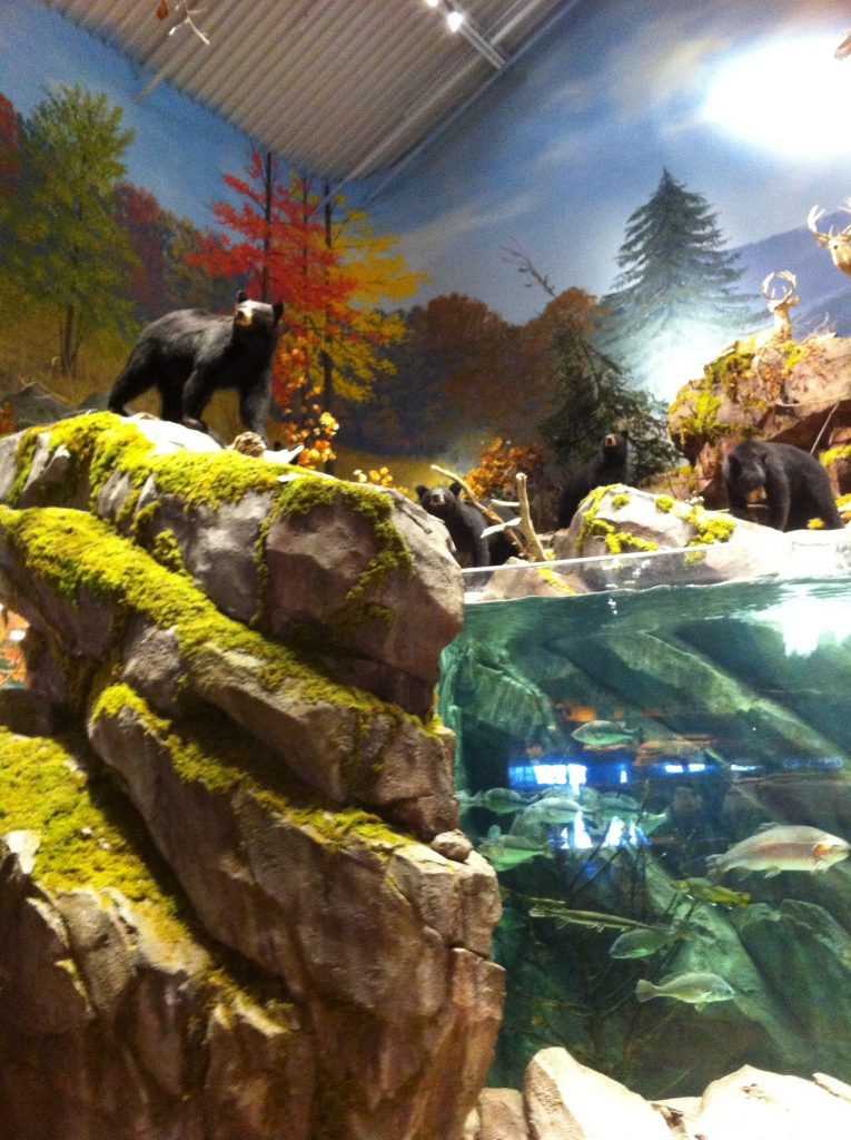 Enormous Fish tanks and Bears