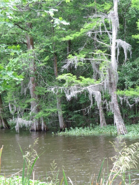 The bayous