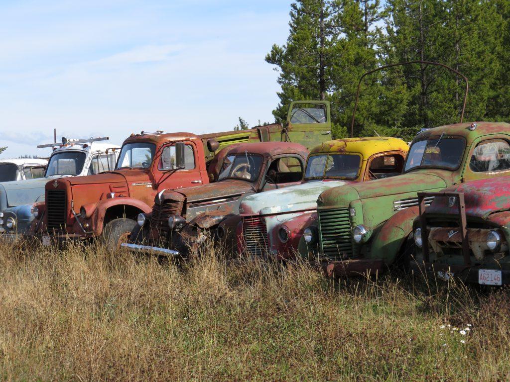 Old truck graveyard