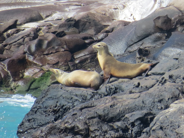 Seals on the coast