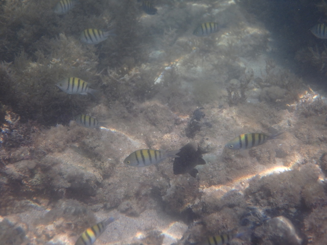 Snorkelling at Playa Escondido