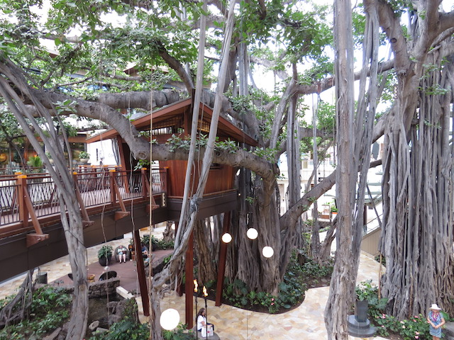 Banyan tree in the International Marketplace Shopping Centre, Waikiki