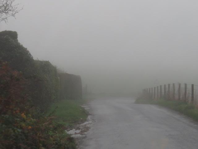Foggy Drives