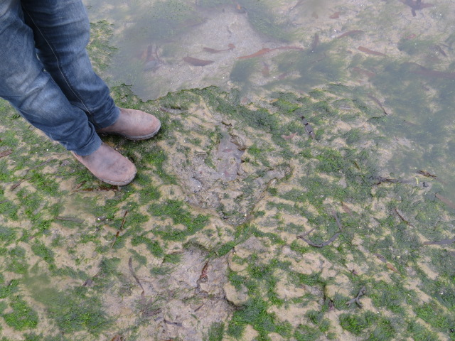 Dinosaur Footprint 180 million years old