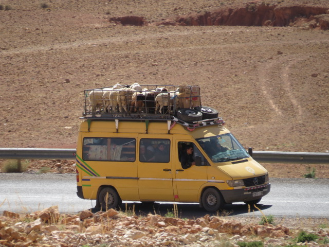 Combined people and animal transport