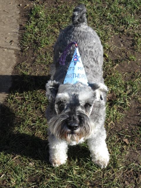 Digby's Birthday