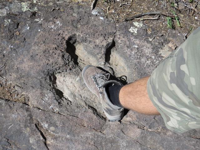 Dinosaur Footprints near camp