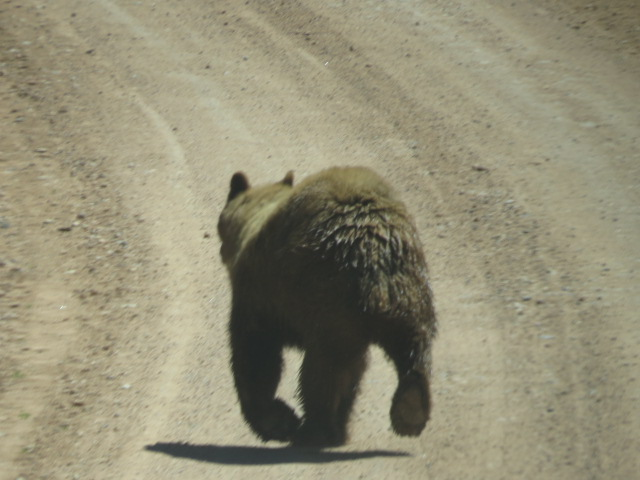 Our First Bear Sighting!!