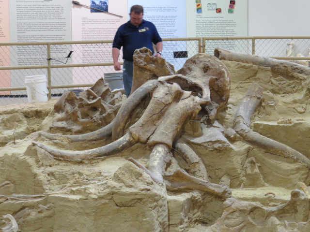 Mammoth Site in Hotsprings, SD. An intact bone bed of Columbian Mammoths - 120+ so far identified