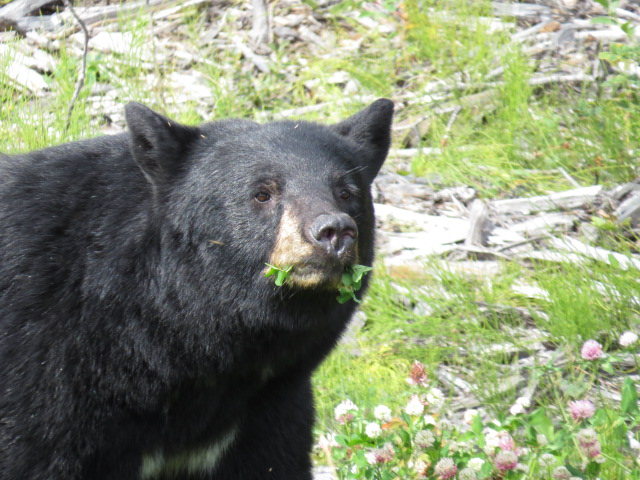 Roadside bear