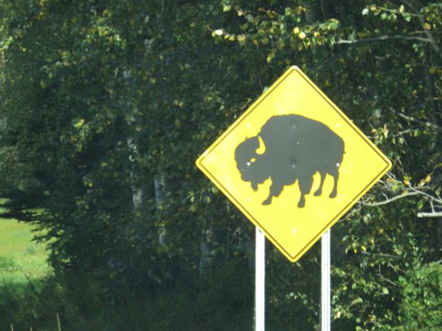 Beware Bison!