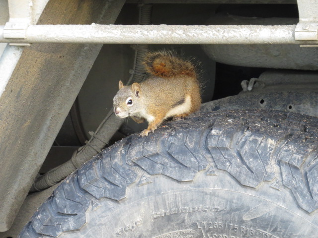 Mischievous Squirrel