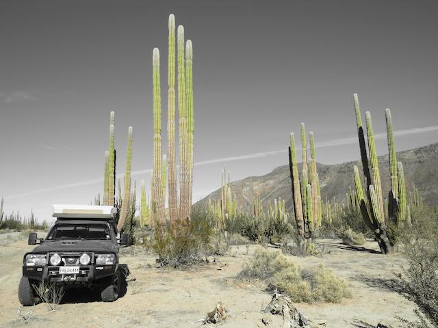 Look Bec... More Cactus!!!